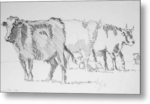 Cow Metal Print featuring the drawing Cows by Mike Jory