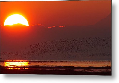 Sunrise Metal Print featuring the photograph Boundary Bay Sunrise by Shari Sommerfeld