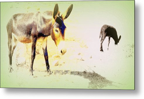 Donkey Metal Print featuring the photograph I Feel Totally Dried Out But I'm Not Dead Yet by Hilde Widerberg