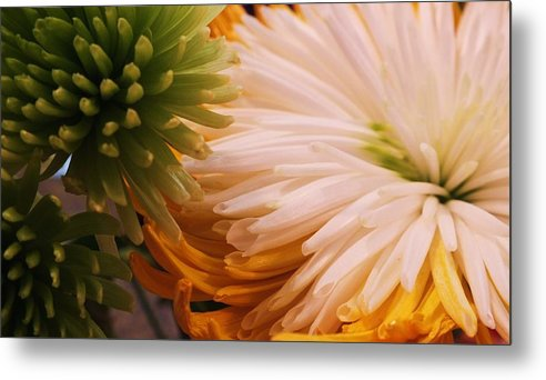 Spring Metal Print featuring the photograph Spring Has Sprung II by Anna Villarreal Garbis