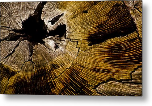 Tree Rings Metal Print featuring the photograph Stump Art by Patrick Moore