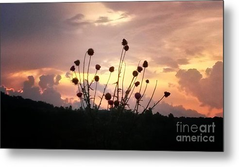 Wild Bouquet Metal Print featuring the photograph Wild Bouquet by Maria Urso