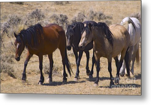 Horses Metal Print featuring the photograph Wild Mares-signed-#0271 by J L Woody Wooden
