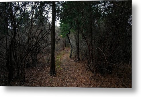 Landscape Metal Print featuring the photograph Wooded Way by David DeCenzo