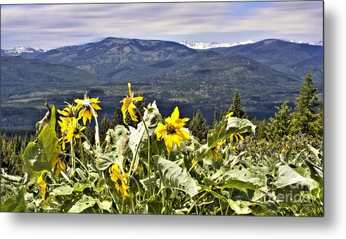 Montana Landscapes Photographs Metal Print featuring the photograph Nature Dance by Janie Johnson