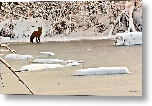Fox Metal Print featuring the photograph Winter Fox by Edward Peterson