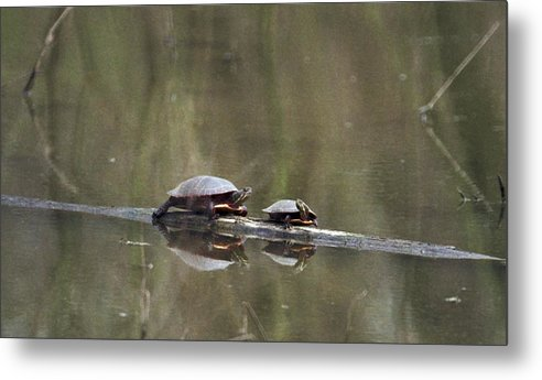 Turtle Metal Print featuring the photograph 070406-68 by Mike Davis