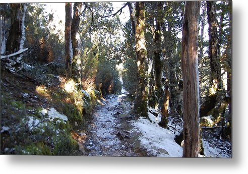 Landscape Metal Print featuring the painting King Billy Forest Cradle Mountain by Sarah King