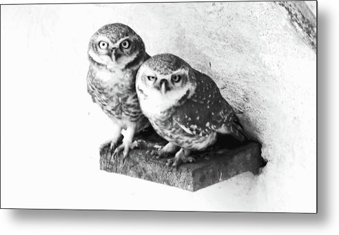 Owls Metal Print featuring the photograph Angry Birds by Lora Louise