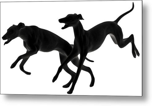 Greyhounds Metal Print featuring the photograph Greyhounds Travelling At 45 Mph by Christine Till