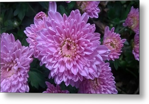Pink Metal Print featuring the photograph Pink Flower by Kenny Flaten