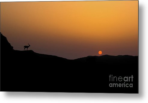 Sunset Metal Print featuring the photograph Stag Silhouette by Shaun Wilkinson