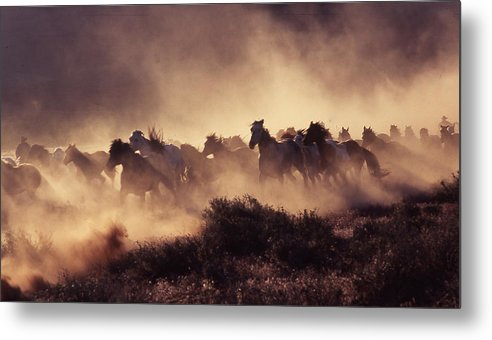 Horses Metal Print featuring the photograph Stampede by Francine Gourguechon