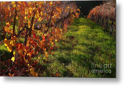 California Wine Country Metal Print featuring the photograph Vineyard 13 by Xueling Zou
