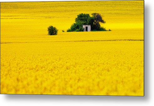 Field Metal Print featuring the photograph Yellow by Evgeni Dinev