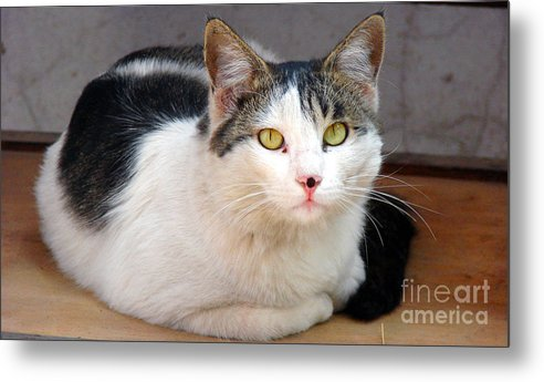 Cat Eyes Metal Print featuring the photograph Yellow Eyes by Shariq Khan