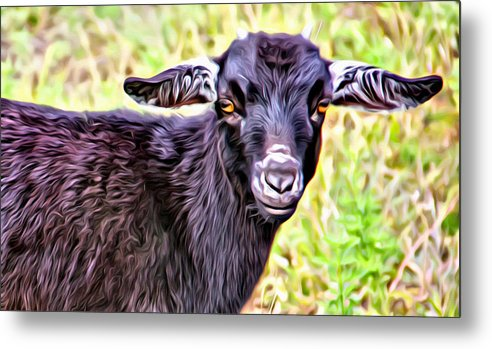 Baby Goat Metal Print featuring the photograph Baby Billy by Alice Gipson