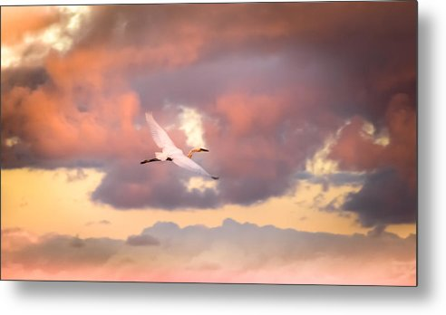 Egrets In Flight Metal Print featuring the photograph When Heaven Beckons by Karen Wiles