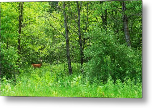 Wisconsin Metal Print featuring the photograph For Tori by Anna Villarreal Garbis