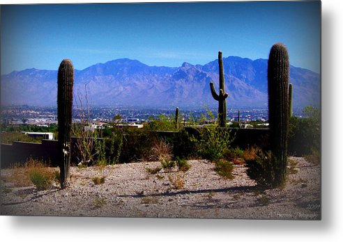 Tucson Metal Print featuring the photograph Catalinas From Picture Rocks Road by Aaron Burrows