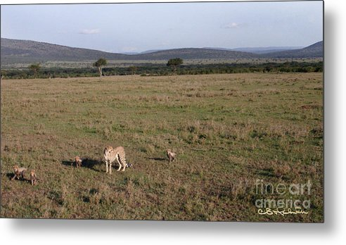 Cheetah Metal Print featuring the photograph Perilous Journey by CB Hackworth
