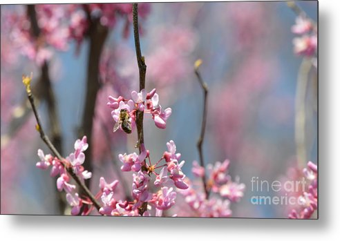 Bee Metal Print featuring the photograph Bee On Pink Bloom by Diane Friend
