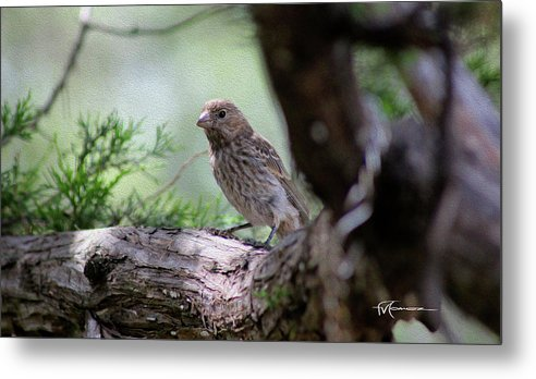 Wildlife Outdoor Images Metal Print featuring the photograph Perch Pondering by Felipe Gomez