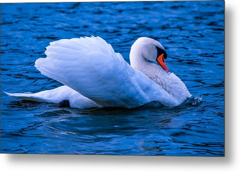 Avian Metal Print featuring the photograph Abreast by Brian Stevens