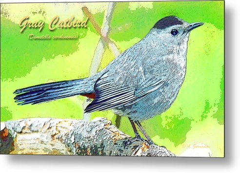 Biology Metal Print featuring the photograph Gray Catbird Digital Art by A Gurmankin
