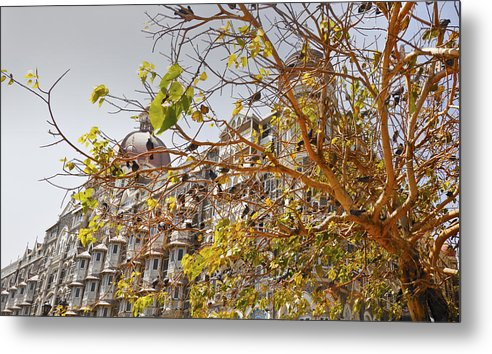 Landscape Metal Print featuring the photograph Pigeon Tree At The Taj by Kantilal Patel