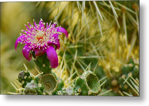 Flower Metal Print featuring the photograph Pretty In Pink Too by Patrick Moore