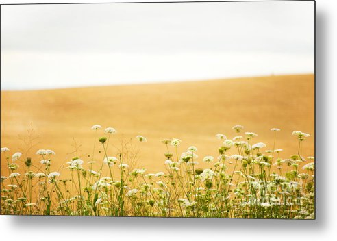 Grassy Hill Metal Print featuring the photograph Run With Me Through A Field Of Wild Flowers by Artist and Photographer Laura Wrede