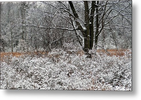 Winter Metal Print featuring the photograph The Beauty Of Winter by Aimee L Maher Photography and Art Visit ALMGallerydotcom