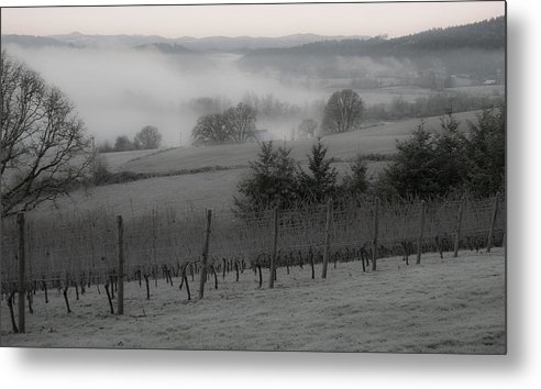 Vineyard Metal Print featuring the photograph Winter Vineyard by Jean Noren