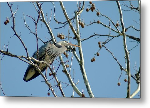 Bird Metal Print featuring the photograph 040510-78 by Mike Davis