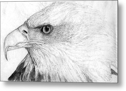Pencil Drawing Metal Print featuring the drawing Bald Eagle Profile by Lucien Van Oosten