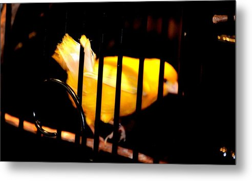 Little Yellow Bird Metal Print featuring the photograph Little Yellow Bird by Anand Swaroop Manchiraju
