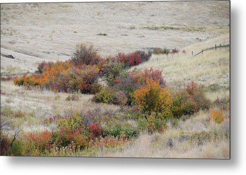 Prairie Metal Print featuring the photograph Prairie Beauty by Whispering Peaks Photography