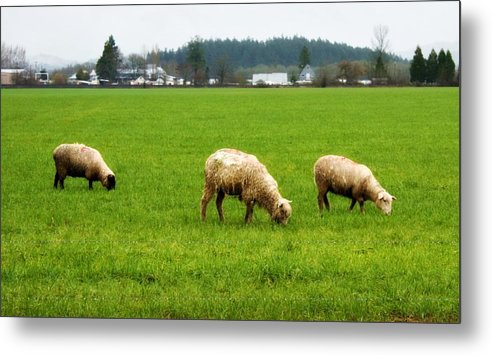 Nature Metal Print featuring the photograph Sheep On The Range by Cathie Tyler