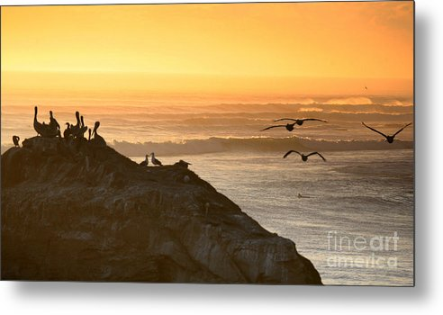 Surf Metal Print featuring the photograph Sunset Pelicans IIi by Chuck Kuhn