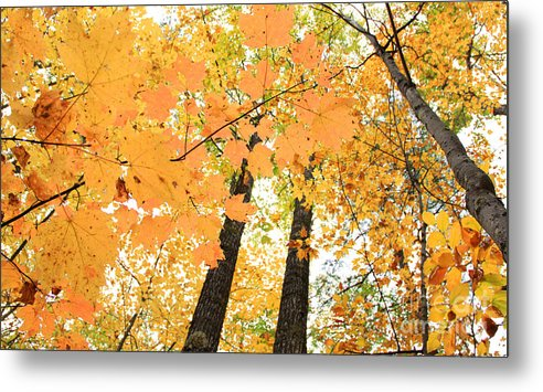 Fall In Nh Metal Print featuring the photograph Autumn Days by Michael Mooney