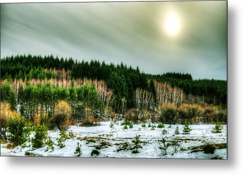 Forest Metal Print featuring the photograph Forest Next Door by Aia Ranguelova
