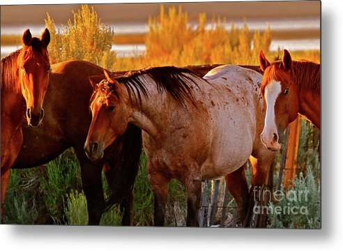 Horse Metal Print featuring the photograph Three Horses Of A Suspicious Corral by Gus McCrea