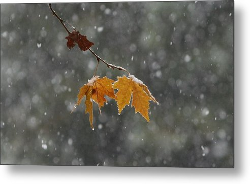Leaves Metal Print featuring the photograph First Snow by Paul Shoaf