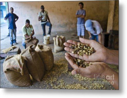 Santo Dominga Coffee Metal Print featuring the photograph Coffee Beans Santo Domingo by John Lee Montgomery III