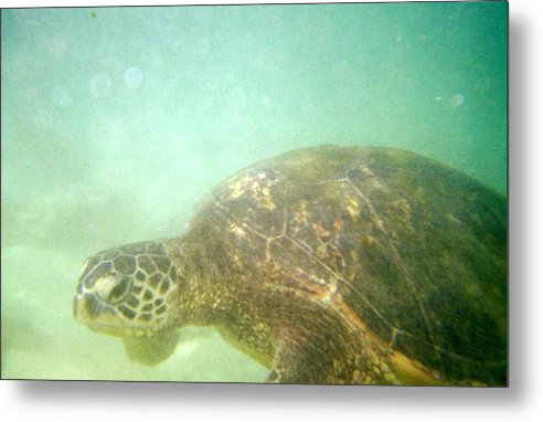Green Metal Print featuring the photograph Green Sea Turtle 2 by Mark Cheney