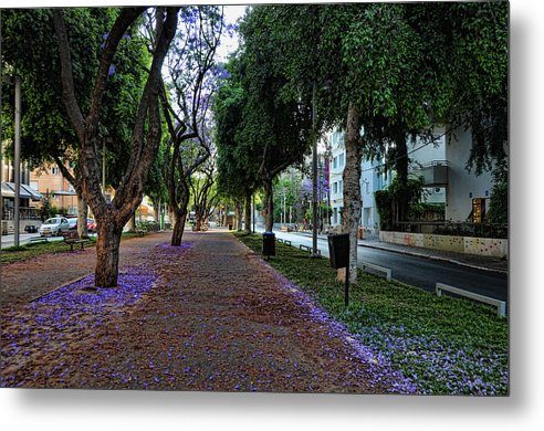 Foliage Metal Print featuring the photograph Rothschild Boulevard by Ron Shoshani