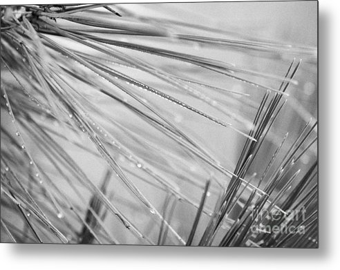 Europe Metal Print featuring the photograph water droplets from mountain mist running down pine needles on conifer trees on El Teide mountain Tenerife Canary Islands Spain by Joe Fox