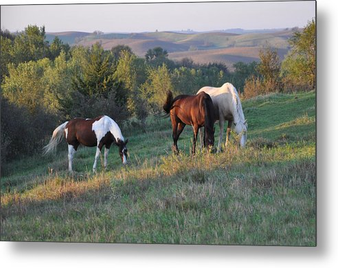 Tags: Metal Print featuring the photograph Horses On The Range by Annette Van Buren