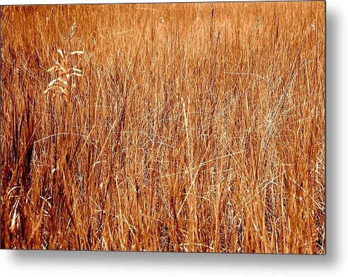 Field Metal Print featuring the photograph Golden Field by Caroline Clark